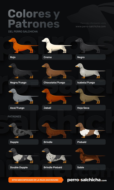 Colores del perro salchicha